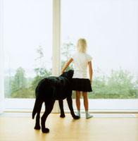 雨降りの風景を眺める犬と女の子