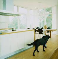 キッチン前を歩く子供と犬