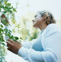 庭の植物の葉に触れる女性