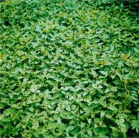 たくさんのグリーンの植物