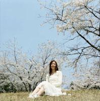 桜咲く草原に座る女性