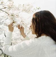 桜の枝を手に取り見つめる女性