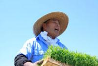 イネの苗を運ぶ笑顔の農夫