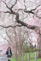 桜並木の下を歩く女子高生