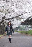 桜並木を見上げながら歩く女子高生