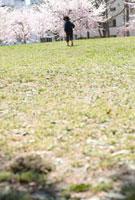 公園を歩く男の子の後姿