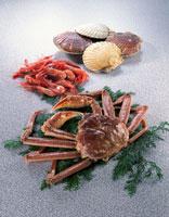 魚介集合 20013001650| 写真素材・ストックフォト・画像・イラスト素材|アマナイメージズ