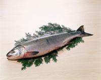 鮭(銀聖)