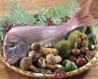 秋素材集合(鯛) 20013013858| 写真素材・ストックフォト・画像・イラスト素材|アマナイメージズ