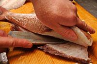 鯛 20013014515| 写真素材・ストックフォト・画像・イラスト素材|アマナイメージズ