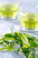 緑茶葉 20013014519  写真素材・ストックフォト・画像・イラスト素材 アマナイメージズ
