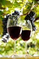 ワイン 20013014546| 写真素材・ストックフォト・画像・イラスト素材|アマナイメージズ