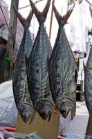 干し魚 20013014816| 写真素材・ストックフォト・画像・イラスト素材|アマナイメージズ