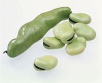 そら豆 20013020321| 写真素材・ストックフォト・画像・イラスト素材|アマナイメージズ