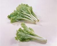 山東菜(白菜系)