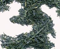 煎茶 20013023282  写真素材・ストックフォト・画像・イラスト素材 アマナイメージズ