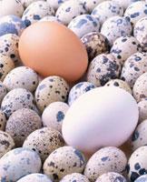 卵3種 20013023304| 写真素材・ストックフォト・画像・イラスト素材|アマナイメージズ
