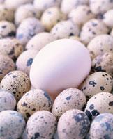 卵2種 20013023305| 写真素材・ストックフォト・画像・イラスト素材|アマナイメージズ