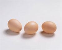 卵 20013023319| 写真素材・ストックフォト・画像・イラスト素材|アマナイメージズ