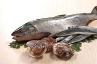秋素材集合(鮭、さんま、帆立) 20013023732| 写真素材・ストックフォト・画像・イラスト素材|アマナイメージズ