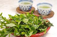緑茶葉 20013023956  写真素材・ストックフォト・画像・イラスト素材 アマナイメージズ