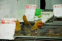 市場(鶏)