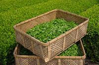 緑茶葉 20013025333  写真素材・ストックフォト・画像・イラスト素材 アマナイメージズ
