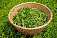 緑茶葉 20013025337  写真素材・ストックフォト・画像・イラスト素材 アマナイメージズ