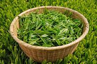 緑茶葉 20013025341  写真素材・ストックフォト・画像・イラスト素材 アマナイメージズ