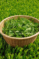 緑茶葉 20013025342  写真素材・ストックフォト・画像・イラスト素材 アマナイメージズ