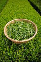 緑茶葉 20013025344  写真素材・ストックフォト・画像・イラスト素材 アマナイメージズ
