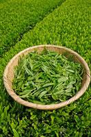 緑茶葉 20013025345  写真素材・ストックフォト・画像・イラスト素材 アマナイメージズ