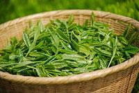 緑茶葉 20013025346  写真素材・ストックフォト・画像・イラスト素材 アマナイメージズ
