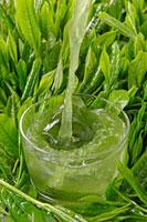 冷茶 20013025400  写真素材・ストックフォト・画像・イラスト素材 アマナイメージズ