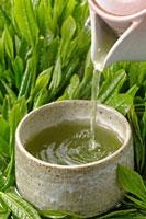 日本茶 20013025402  写真素材・ストックフォト・画像・イラスト素材 アマナイメージズ