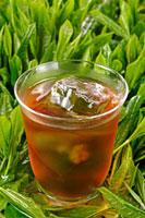 アイスウーロン茶 20013025406  写真素材・ストックフォト・画像・イラスト素材 アマナイメージズ