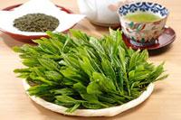緑茶葉 20013025408  写真素材・ストックフォト・画像・イラスト素材 アマナイメージズ