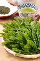 緑茶葉 20013025409  写真素材・ストックフォト・画像・イラスト素材 アマナイメージズ