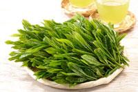緑茶葉 20013025411  写真素材・ストックフォト・画像・イラスト素材 アマナイメージズ