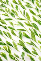 緑茶葉 20013025420  写真素材・ストックフォト・画像・イラスト素材 アマナイメージズ