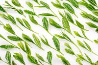 緑茶葉 20013025421  写真素材・ストックフォト・画像・イラスト素材 アマナイメージズ