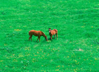 草原に二頭の馬 20014000214| 写真素材・ストックフォト・画像・イラスト素材|アマナイメージズ