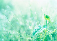 葉と露 20014000334| 写真素材・ストックフォト・画像・イラスト素材|アマナイメージズ