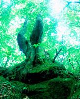 木漏れ日 20014000371| 写真素材・ストックフォト・画像・イラスト素材|アマナイメージズ