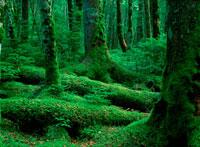 新緑の木の根元