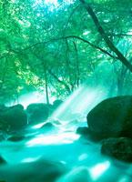 渓流と木漏れ日
