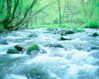 渓流と新緑