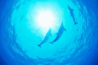 イルカの群れ