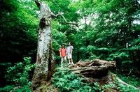 木のそばに立つ女の子2人 20014001094| 写真素材・ストックフォト・画像・イラスト素材|アマナイメージズ
