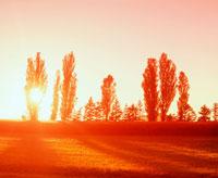 秋の夕日と木々